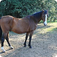 Adopt A Pet :: Tonto - Bellingham, WA