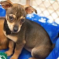 Adopt A Pet :: JuJuBee Jones - Millersville, MD