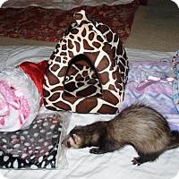 Adopt A Pet :: Minnie - Acworth, GA