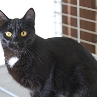 Adopt A Pet :: Parker - Rawlins, WY
