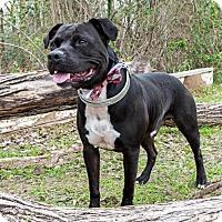 Adopt A Pet :: A - ELLIOTT - Portland, OR