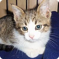 Adopt A Pet :: KENDRIC - Medford, WI