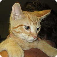 Adopt A Pet :: Hopper - Reeds Spring, MO