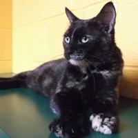 Adopt A Pet :: Little One - Williamsport, PA