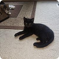Adopt A Pet :: Panther - Tumwater, WA