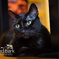 Adopt A Pet :: Liam - Vancouver, BC