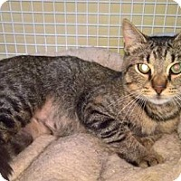 Adopt A Pet :: Pinellas - Columbus, OH