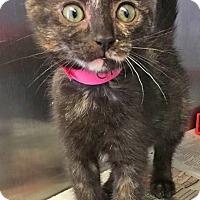 Adopt A Pet :: Ellen - East Brunswick, NJ