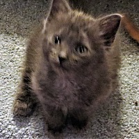 Adopt A Pet :: Sienna - Coldspring, TX