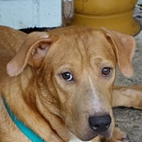 Adopt A Pet :: Donnie~Timid,Precious! - St Petersburg, FL