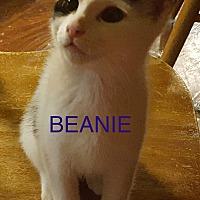 Adopt A Pet :: Beanie-new home w. Porkie 9-09 - detroit, MI