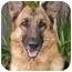 Photo 2 - German Shepherd Dog Dog for adoption in Los Angeles, California - Dasa von Hollywood