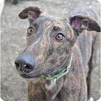 Adopt A Pet :: Brett (Rapid Motion) - Chagrin Falls, OH