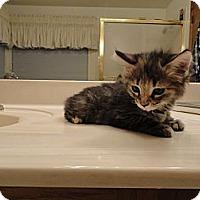 Adopt A Pet :: KARMA - Phoenix, AZ