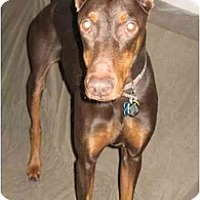 Adopt A Pet :: Charlotte--adopted!! - New Richmond, OH