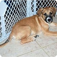 Adopt A Pet :: Opie - Minneola, FL