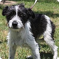 Adopt A Pet :: DARLA - W. Warwick, RI