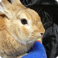 Adopt A Pet :: Brody - Newport, DE