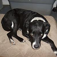 Labrador Retriever Mix Dog for adoption in Dothan, Alabama - Rex
