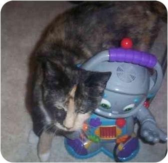 Domestic Shorthair Cat for adoption in Gloucester, Virginia - Leona