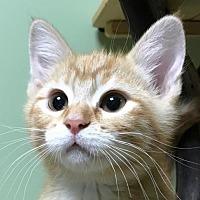 Adopt A Pet :: Popeye - Auburn, CA