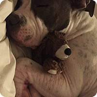 Adopt A Pet :: Titan, amazing boy - Sacramento, CA