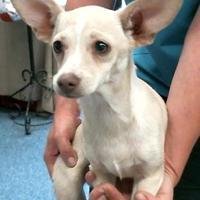Adopt A Pet :: 155668 - Bakersfield, CA