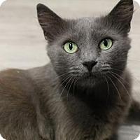 Adopt A Pet :: Rachel - Herndon, VA