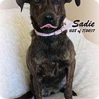 Adopt A Pet :: Sadie - Gaylord, MI