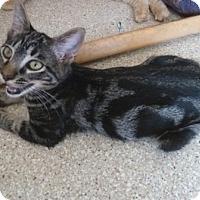 Adopt A Pet :: Clover - Calimesa, CA