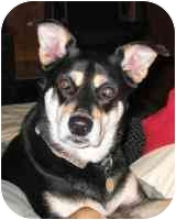 German Shepherd Dog Mix Dog for adoption in Warren, New Jersey - Ernie