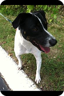 Boxer Mix Dog for adoption in Portsmouth, Rhode Island - Blanche- local!