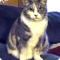 Adopt A Pet :: Anha - Bentonville, AR