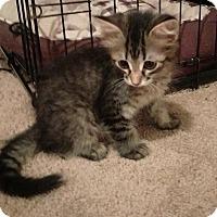 Adopt A Pet :: Miley - Edmonton, AB