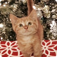 Adopt A Pet :: Garfield - McDonough, GA