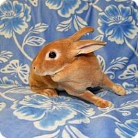 Adopt A Pet :: Socorro - Chesterfield, MO