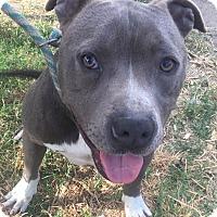 Adopt A Pet :: Duke - Forest grove, OR