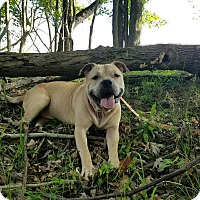 Adopt A Pet :: Ares - Elyria, OH