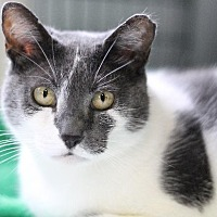 Adopt A Pet :: Venus - Lawrenceville, NJ