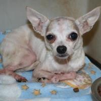 Adopt A Pet :: Pablo - Shohola, PA