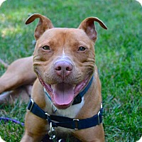 Adopt A Pet :: Kingsley - Reisterstown, MD