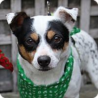 Adopt A Pet :: Barney - Pacific Grove, CA
