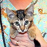 Adopt A Pet :: Greg - Wildomar, CA
