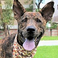 Adopt A Pet :: Basil - San Francisco, CA