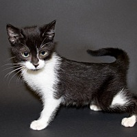 Adopt A Pet :: Bobbi - Pasadena, CA