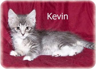 Domestic Mediumhair Kitten for adoption in Brighton, Michigan - Kevin
