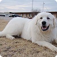 Adopt A Pet :: GPRO Pyrs for Adoption - Oklahoma City, OK