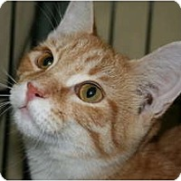 Adopt A Pet :: Tanner - Frederick, MD