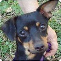 Adopt A Pet :: Smokey - Allentown, PA