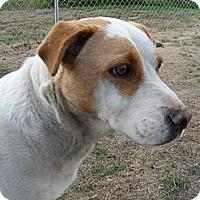 Adopt A Pet :: Honey #5185 - Jerome, ID